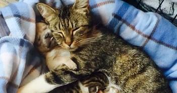 母猫と子犬