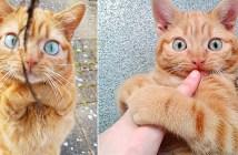 足と顎にハンデを負った猫