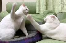 当たらない猫パンチ