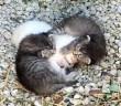 妹を守る兄猫達