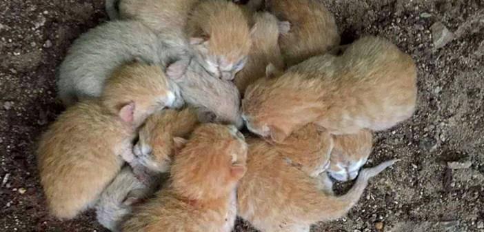助け出された8匹の子猫達