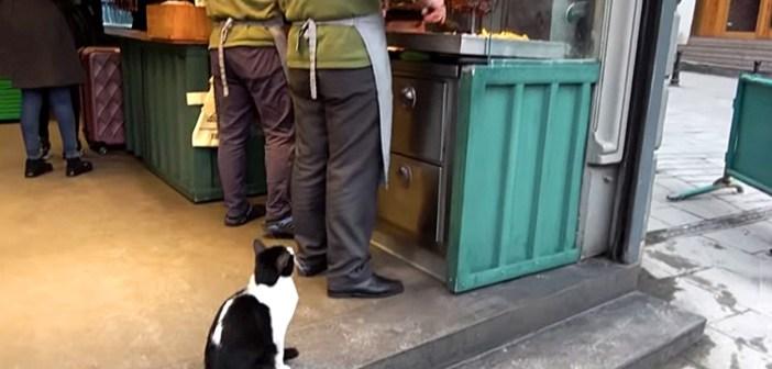 ケバブが欲しい猫