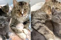 老猫と保護子猫
