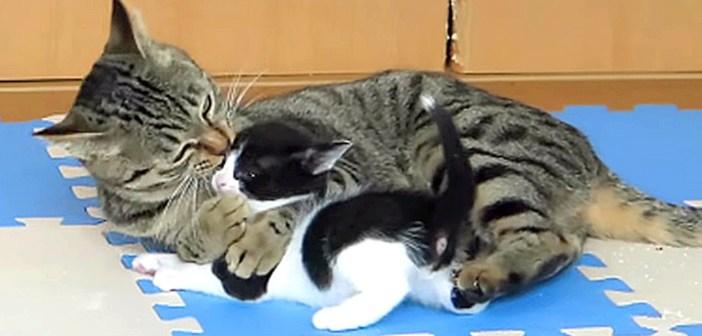 孫猫が好きな猫