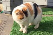 家に通って来る野良猫