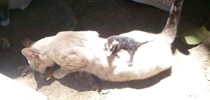 ある日、不思議な赤ちゃんを背中に乗せて帰ってきた猫。家の中へと運び込むと、まるで我が子のように愛情を注ぎ始める!