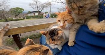 膝の上の猫達