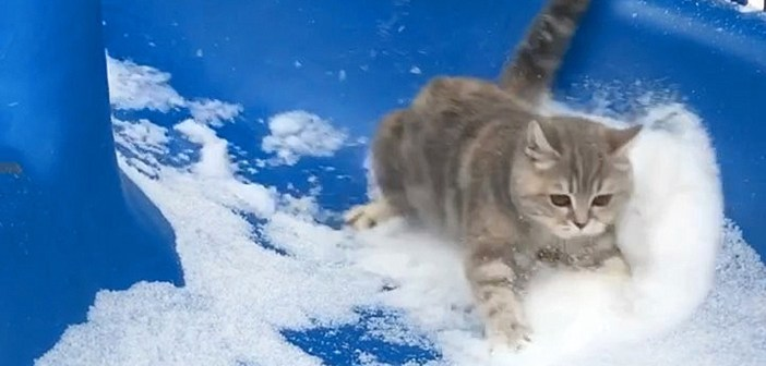 雪の滑り台を滑る猫