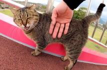 展望台を登る猫