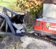 おもちゃの列車と猫