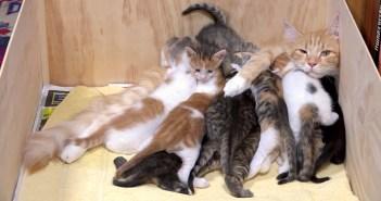 14匹の子猫達