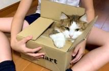 箱好きの猫さん