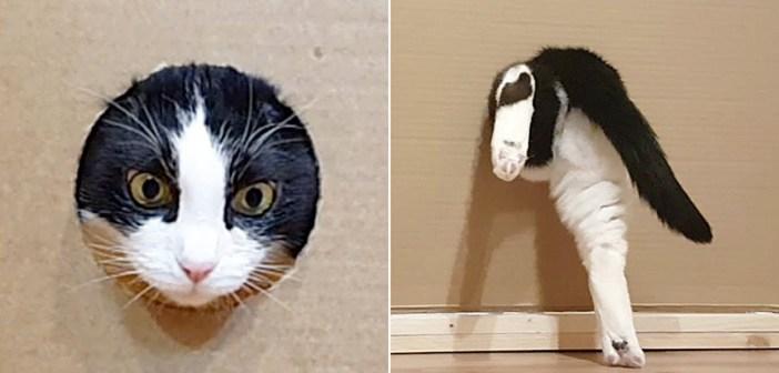 穴に挑む猫