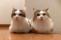 香箱座りで寄り添う猫達