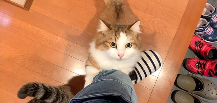 お出迎えする猫