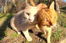 スリスリし合う猫達