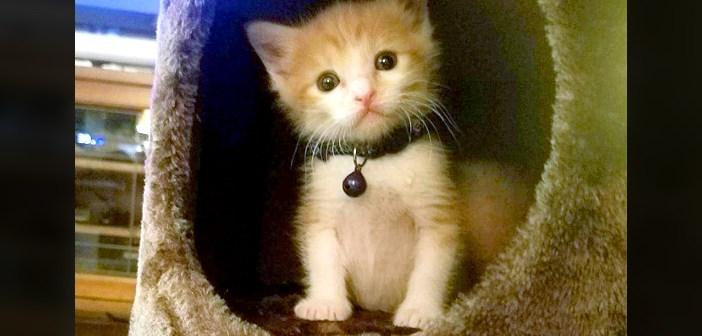 サプライズを届ける子猫