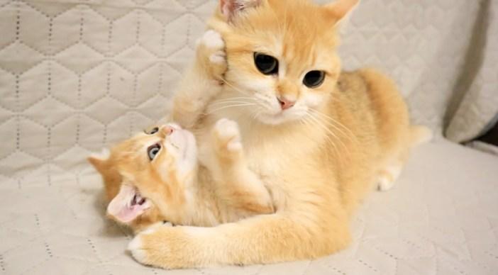 母猫と子猫の攻防戦