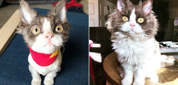 少し変わった容姿の猫