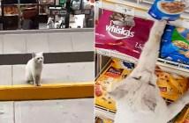 店の前の白猫