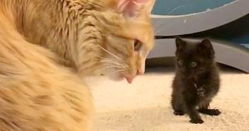 先輩猫を見守る子猫