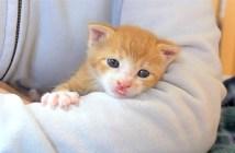 腕の中の子猫