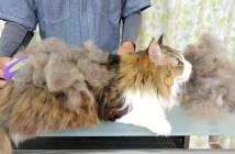 ブラッシング猫