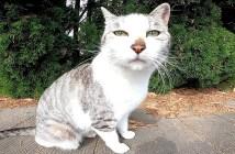 パーキングで出会った猫
