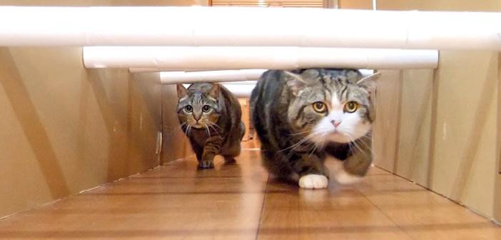 トイレットペーパーの芯ロードに挑む猫達