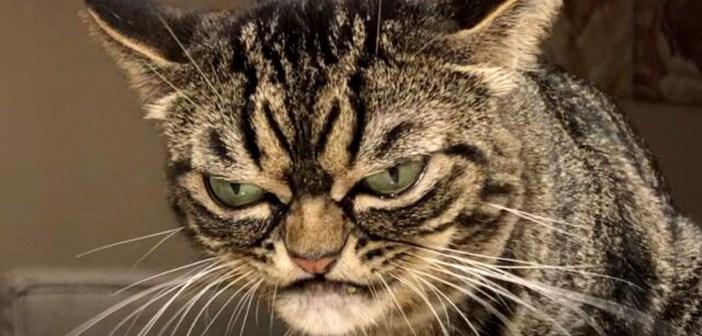 いつも怒っているような猫