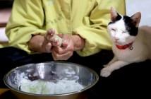 草餅作りを見守る猫