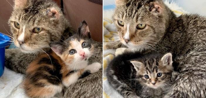 子猫達の寄り添う保護猫