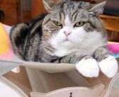 新しいハンモックの使い方を間違えちゃった猫さん。そこに同居猫もやって来て、とっても面白い展開に ( *´艸`)♡