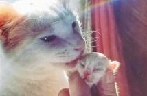 保護猫と猫