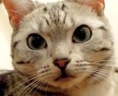 「おばあちゃん、大丈夫?」病気のおばあちゃんのことが心配で心配で、ついに看病を始めた猫さんがとっても優しい