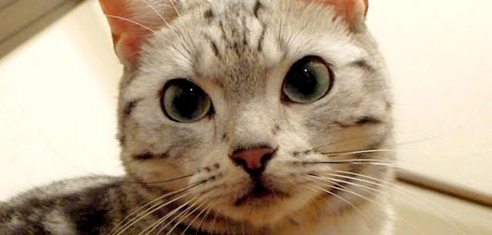看病する猫
