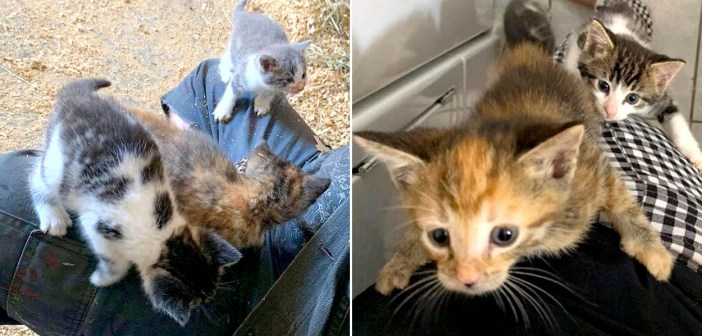 農場で保護された子猫達