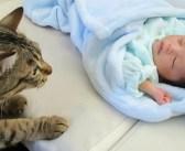 初めて赤ちゃんに出会った猫さん。興味津々だけどドキドキが止まらないようで、可愛い反応が返ってきた ( *´艸`)♡