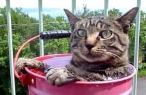 露天風呂に入る猫