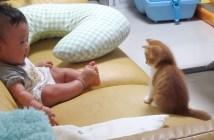 子猫と赤ちゃんの初対面