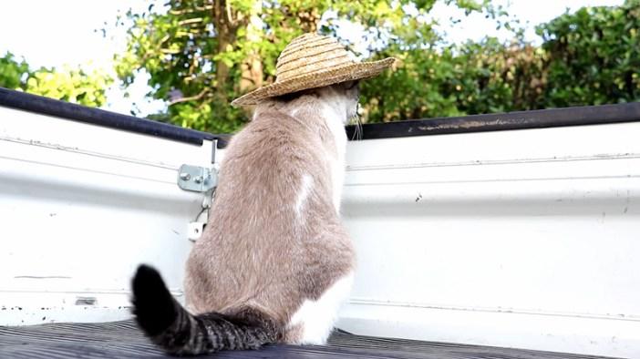 トラックの荷台に座る猫