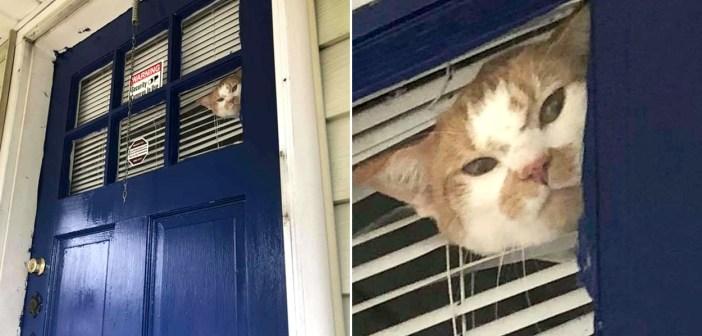 家の中から見つめてくる猫