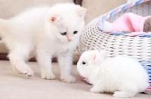 うさぎに興味津々の子猫