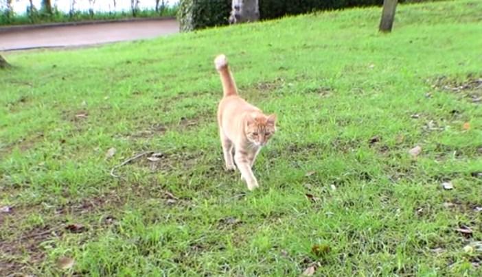 駆け寄ってくる猫