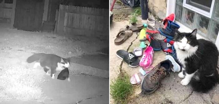 靴を盗む猫
