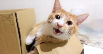 おしゃべりが止まらない子猫