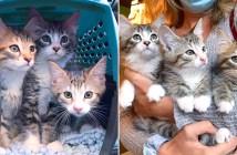 3匹の子猫の兄弟