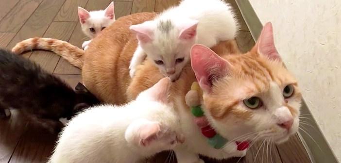 猫と子猫達の初対面