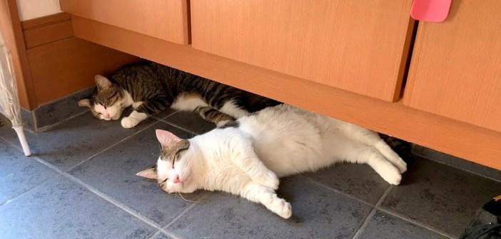家の中に落ちてる猫