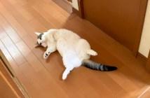 落ちている猫さん